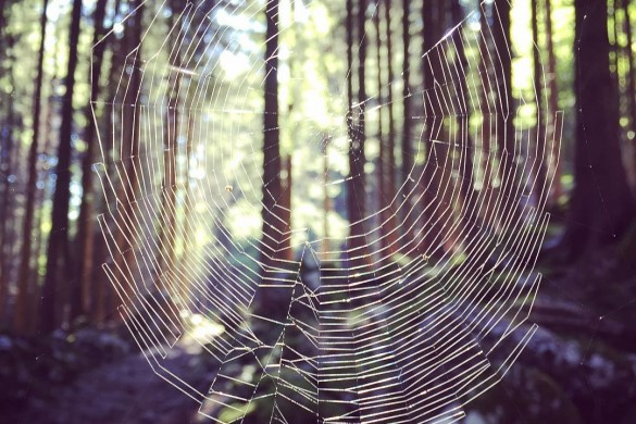 Kennenlernen spinnennetz